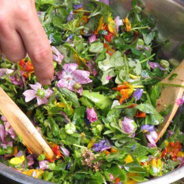 Balade cueillette + transformation de plantes le 4 Juin à 15h